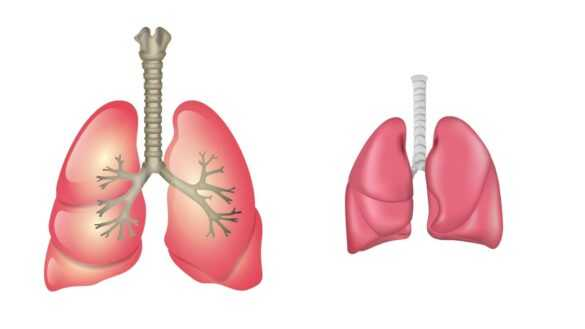 Akciğerler