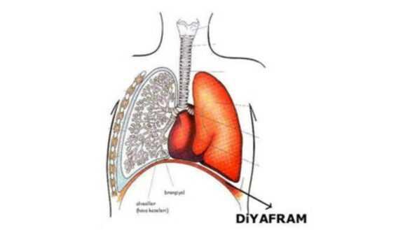Diyafram