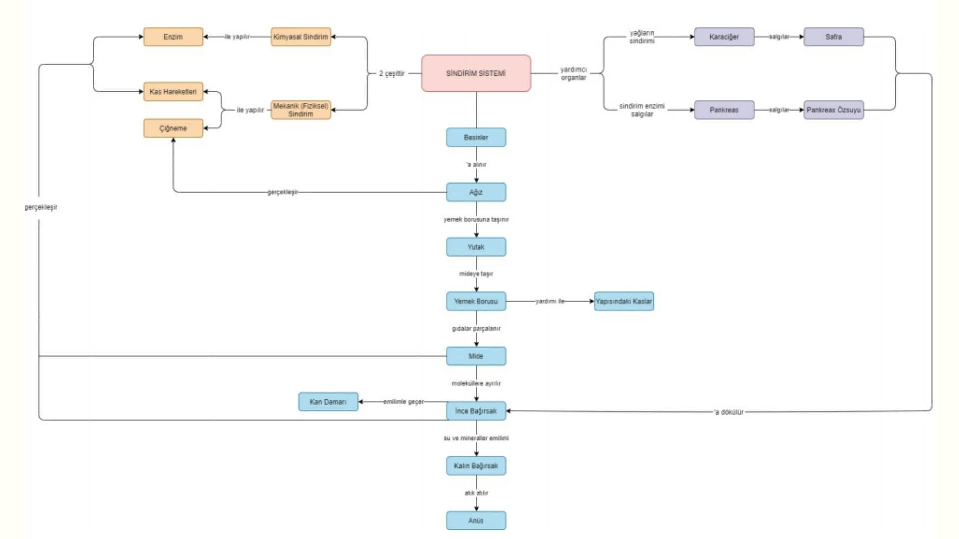 Sindirim sistemi kavram haritası