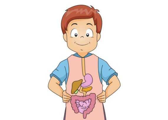 Sindirim sistemi yapı ve organları