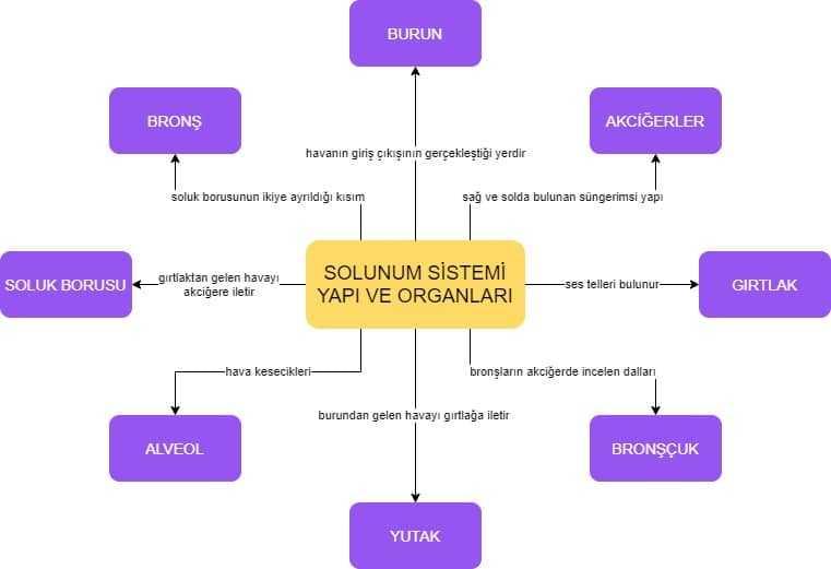 solunum sistemi kavram haritası